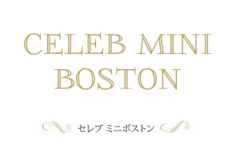 セレブミニボストン